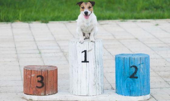 I cani più belli del mondo: oltre 400 razze