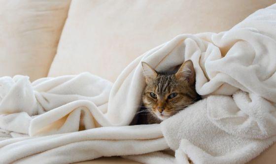 Sintomi, cause e rimedi dell'influenza del gatto