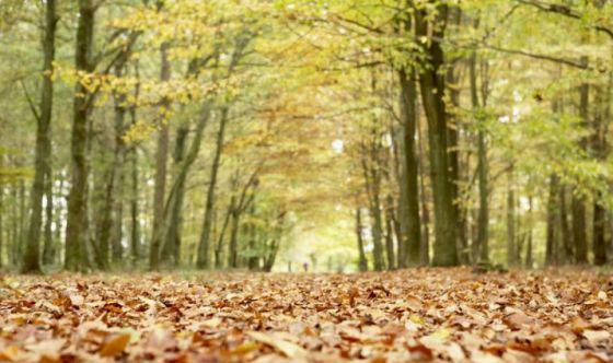 La natura concilia un sonno profondo e ristoratore