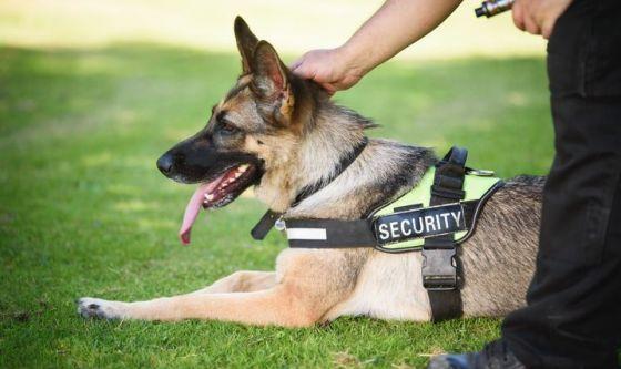 Madrid, musicoterapia contro lo stress dei cani poliziotto