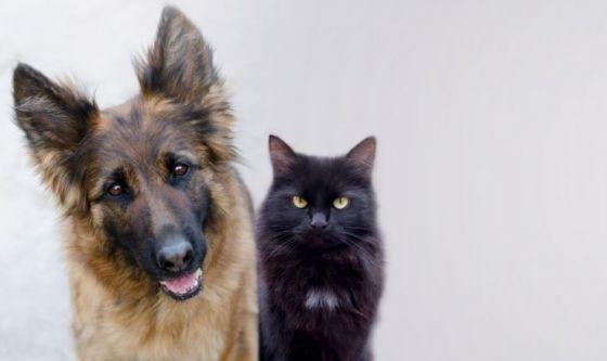 Malattie oculari nel cane e nel gatto: l'uveite