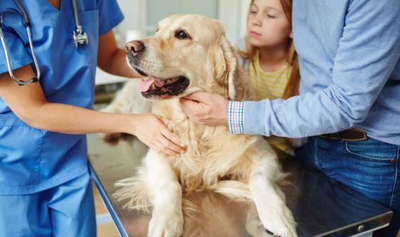 Sangue nelle urine del cane? Potrebbe essere cistite