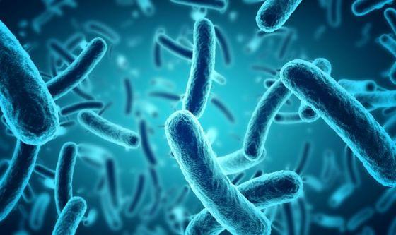 Enterococcus faecium: resistente all'alcol nei disinfettanti
