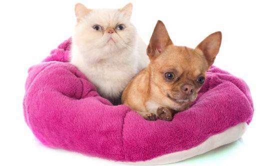 Addio cuccia, la casa diventa pet-friendly