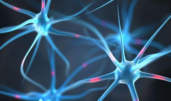Scoperti i neuroni che governano l'appetito