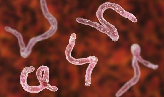 Ectoparassitosi e endoparassitosi: come combatterle?