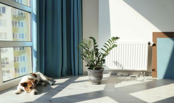 Abito in condominio e ho un cane: posso avere problemi?