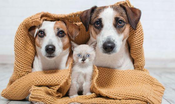 Una donazione per i nostri amici animali