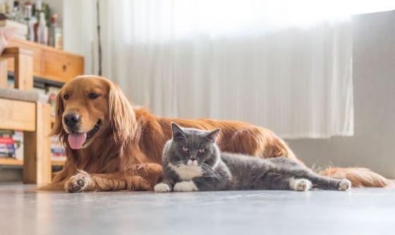 Coronavirus: gli animali da compagnia possono contagiarci?
