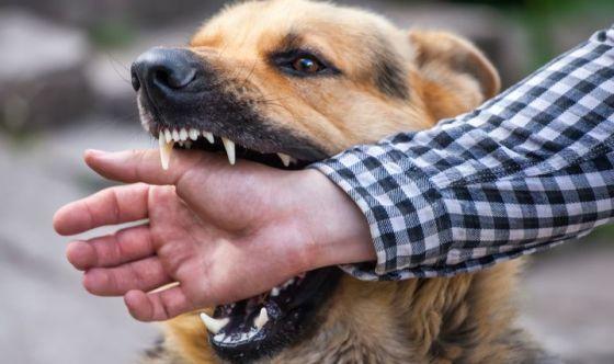Come evitare i morsi degli animali velenosi