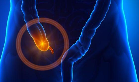 Altro che organo inutile: il funzionamento dell'appendice