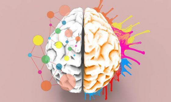 L'attività cerebrale influenza la durata della vita