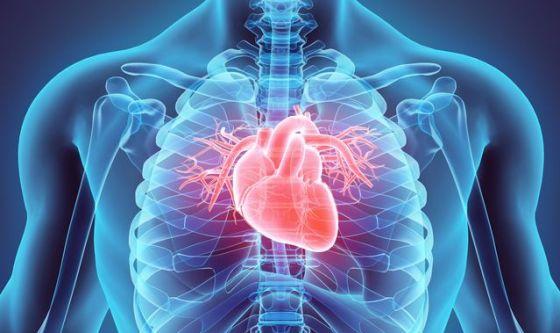Se si eccede nello sport a rischio sono le coronarie