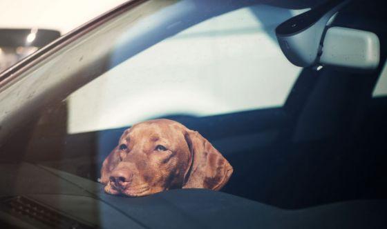Il cane sta male se viaggia in auto: come aiutarlo?
