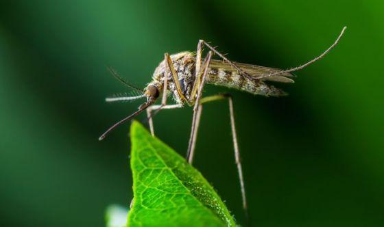 Estate: bimbi protetti dalle punture di zanzara