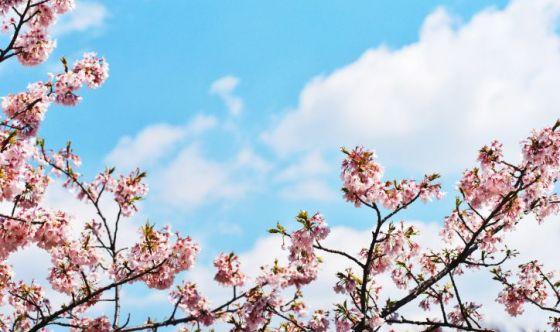 La primavera è il momento ideale per cambiare vita