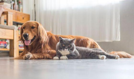Cani e gatti: quali benefici di salute per i bambini?