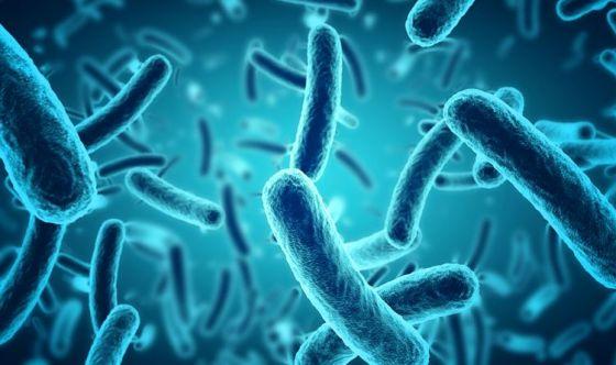 Utilizzare i batteri intestinali per curare le allergie