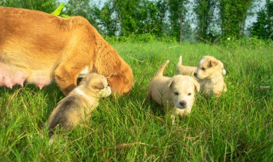 Un momento emozionante: la nostra cagna aspetta i cuccioli
