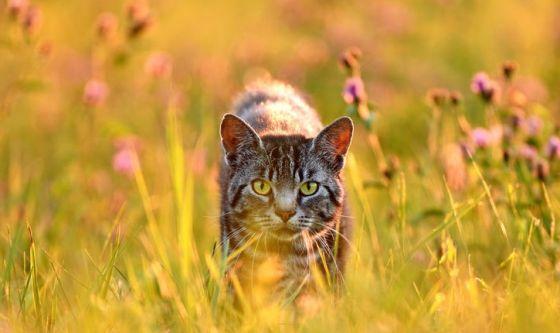 Estate e colpi di calore: ecco i consigli per i gatti