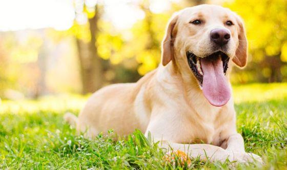 Il cane è sempre contento di vedere il suo proprietario