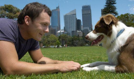 Dieci modi per comunicare con il cane