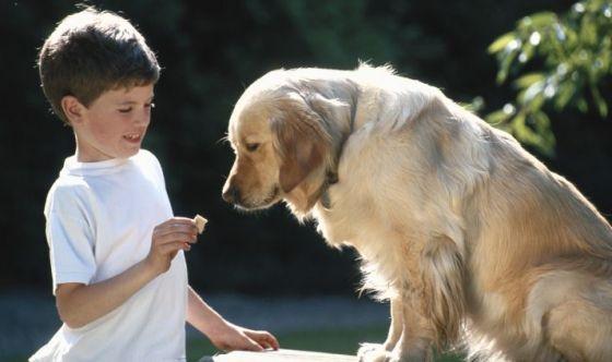 La compagnia di un cane e l'ansia dei bambini