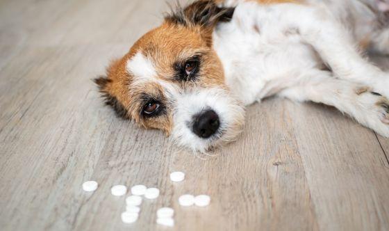Come dare una compressa al cane