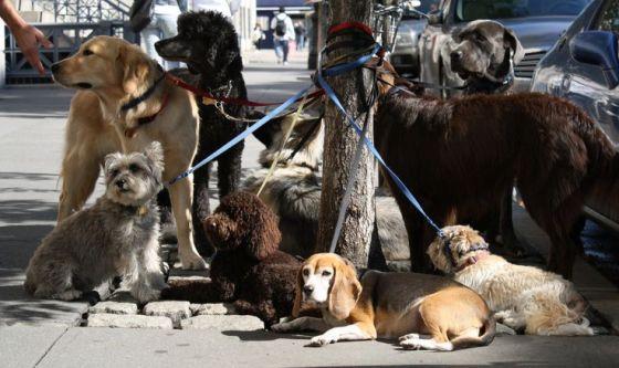 A Milano gli anziani diventano dog-sitter
