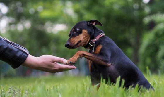 Cani e campagna: quali sono le razze più adatte?