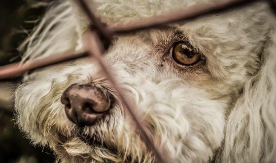 Lav, cani: diminuiscono le adozioni