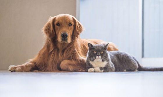 I cani più intelligenti dei gatti?