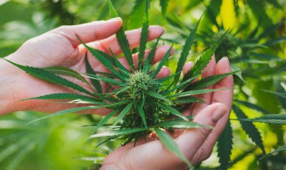 Un gene responsabile della dipendenza da cannabis