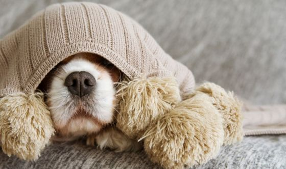 Il cane ha paura dei botti di Capodanno