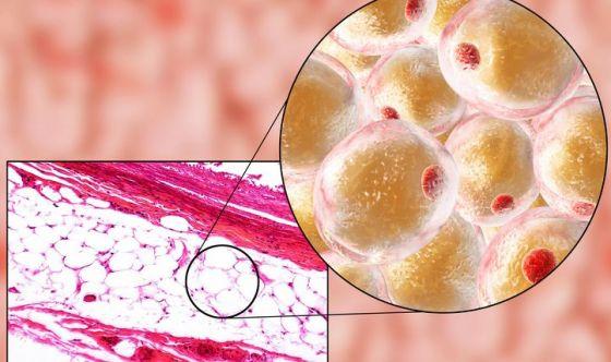 A riparare le ferite ci pensano le cellule lipidiche