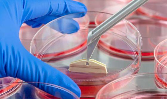 Realizzata la prima cellula staminale cardiaca sintetica