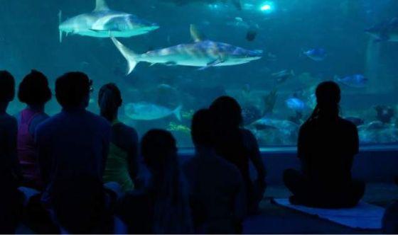Yoga con gli squali per ritrovare la serenità
