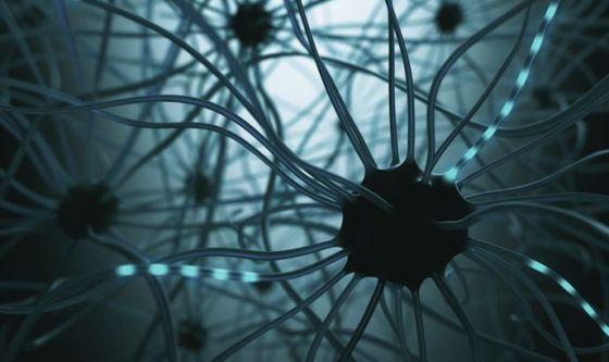 Capito il modo in cui il cervello inibisce i nostri istinti