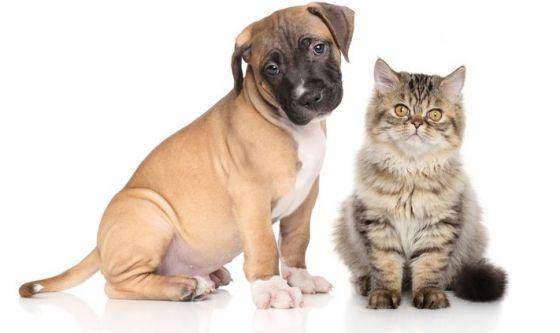 Come accogliere i cuccioli in casa