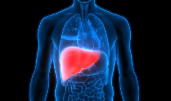Diabete di tipo 2: anche il fegato soffre