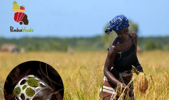 «Dal seme al piatto»: un futuro in rosa per il Mozambico