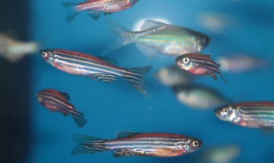 Dagli enzimi di pesce un'ipotesi di cura per gravi malattie