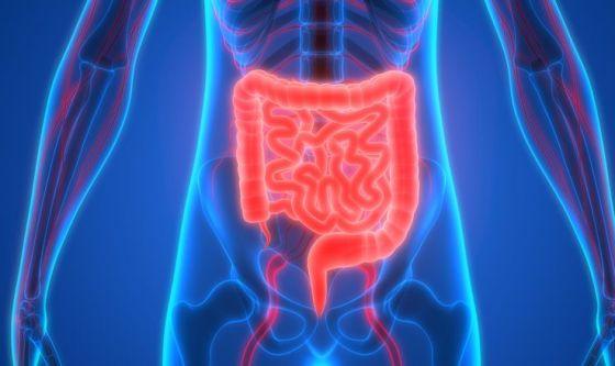 Scoperta una relazione tra steatosi epatica e microbiota