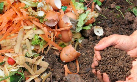 Da scarti agricoli, potenti oli essenziali contro i batteri