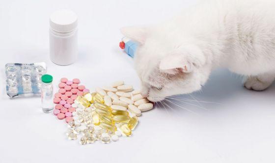 Avete un cane o un gatto? Attenti ai farmaci