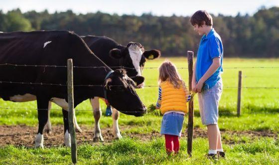 Crescere in una fattoria: un toccasana per i polmoni