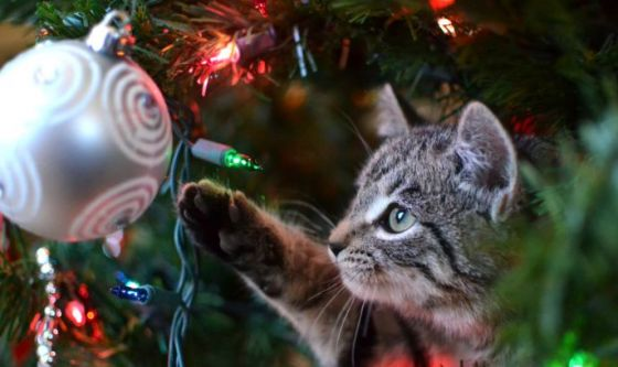 Natale in casa Felix