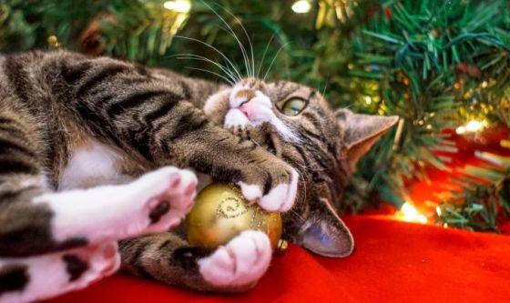 Natale con Felix