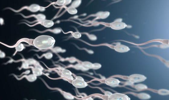 Col cambiamento climatico fertilità e testicoli a rischio