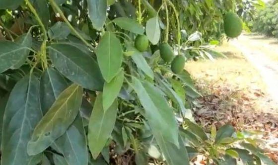 È boom di frutta esotica, rigorosamente Made in Italy